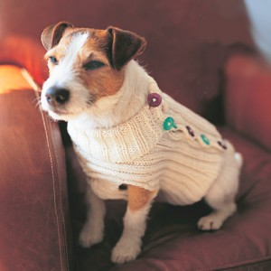 Button-up Dog Sweater Knitting Pattern Image