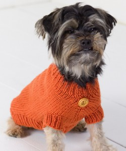 Buttoned Dog Sweater Knitting Pattern Pictures