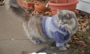 Cat Hoodie Knitting Pattern Pictures