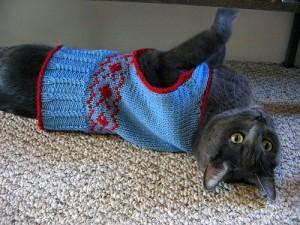 Cat Knitting Sweater Pattern Photos