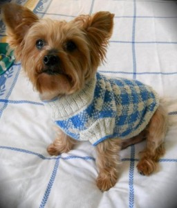 Check Dog Sweater Knitting Pattern Picture