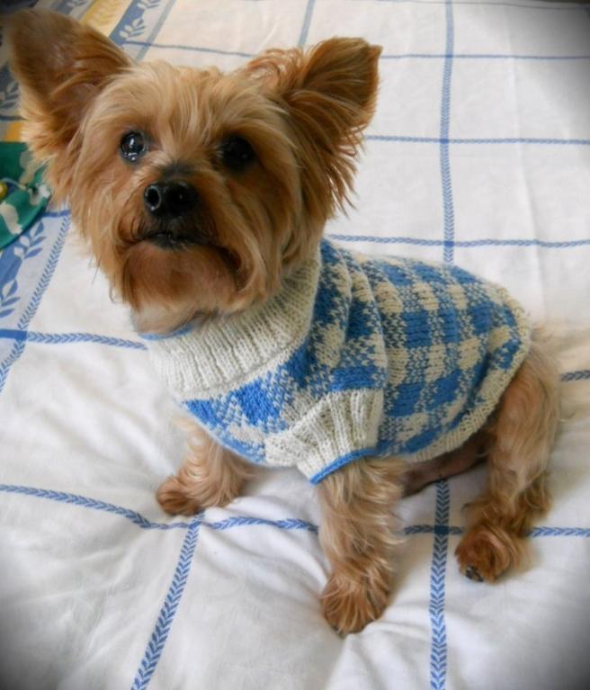 dog coat template - dog sweater knitting pattern a knitting blog
