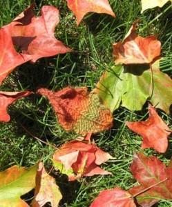 Images of Leaf Knitting Pattern